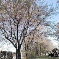 20130405133347_photo_2