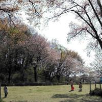 20130405135043_photo_2