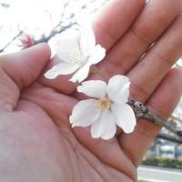 20130405163448_photo_2