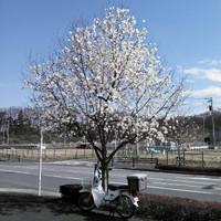 20130321135147_photo