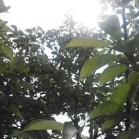 20130525105014_photo